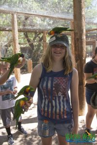 Lory Parrot 158