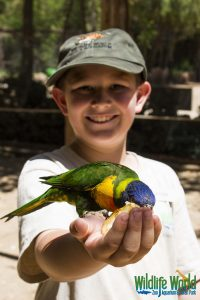 Lory Parrot 166